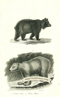 Brown Bear and Polar Bear - North America