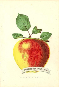 Rosy Apple - Alexander Apple
